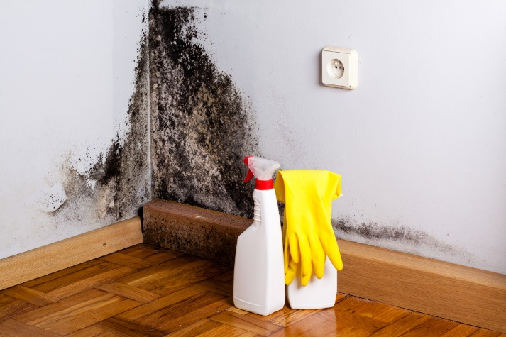 mold damage repair in downriver mi