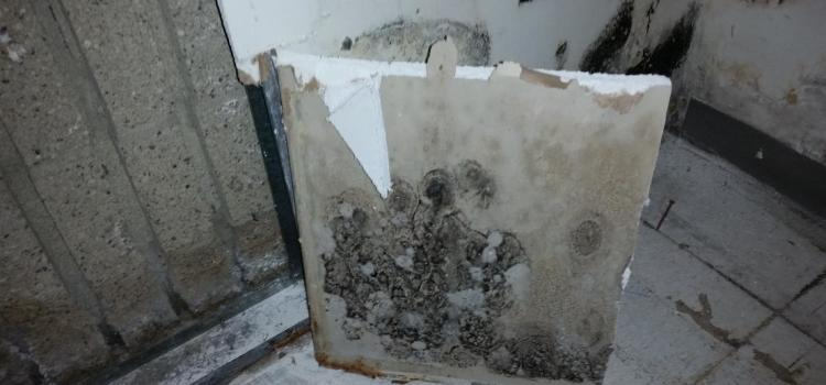 Mold Free Guarantee In Southeast Michigan Clean Up And