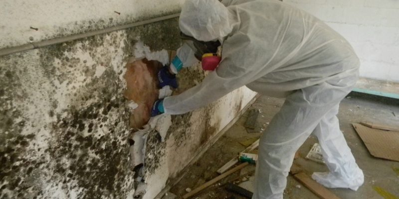 Commercial mold removal in Taylor, Michigan